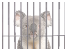 stock photo koala behind bars