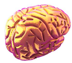 stock photo model of human brain