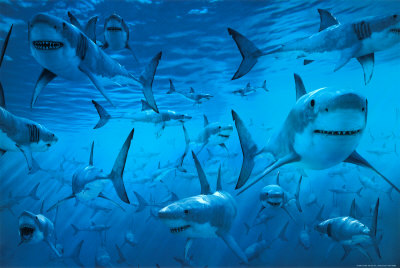 stock photo sharks swimming underwater